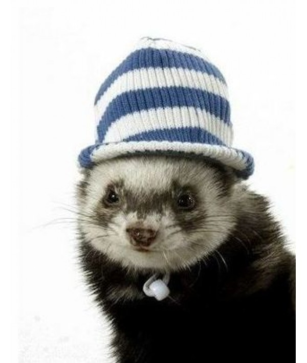 Marshall Visor Cap - czapka w paski